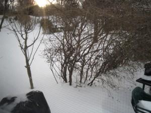 """More """"snowscapes"""""""