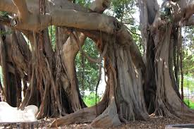 """More Banyan Trees"""